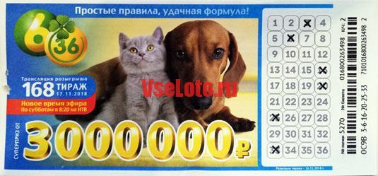 Лотерея 6 из 36 тираж 168 с таксой и кошкой